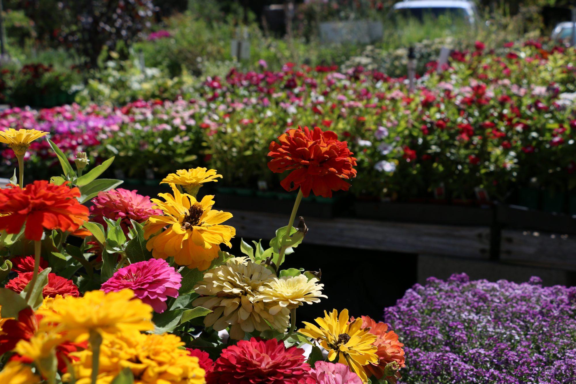 contact us colorful garden center